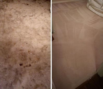 Carpet stain removal by Clean Scene Pro